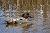 shorebirds-186a