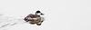 birds-104smx