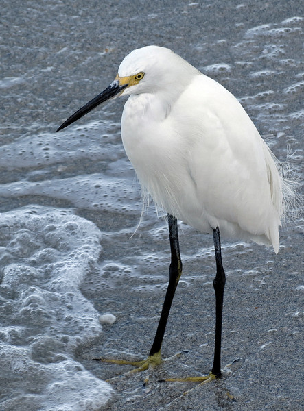 birds-131