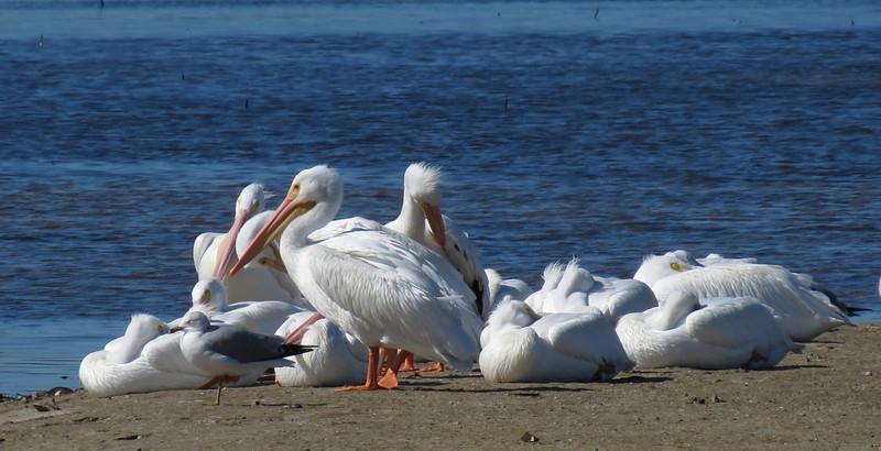 birds-115