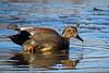 shorebirds-152a