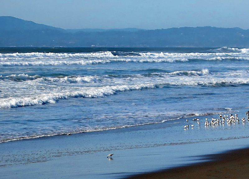 Shorebird and feathered friends