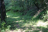 The old trail road sometimes looked like a grassy arbor, sometimes like a forest glen.
