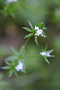 Bedstraw (a Galium species). It seemed to be mostly the tiny flowers that we had trouble identifying quickly. The bigger ones were usually easier.