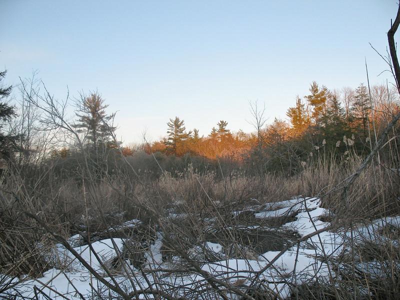 Photo Courtesy of Kevin Rolwing - Surebridge Swamp at dusk