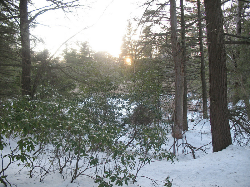 Photo Courtesy of Kevin Rolwing - Arden Surebridge Trail at dusk