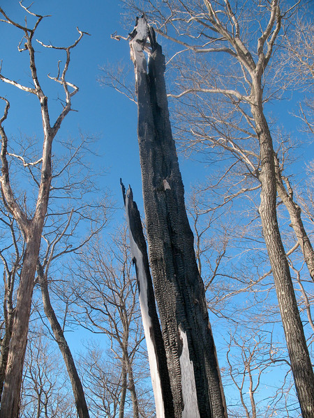 Photo Courtesy of Kevin Rolwing - charred trees on Surebridge Mountain (Lichen Trail) remnants of summer lightning strikes