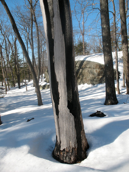 Photo Courtesy of Kevin Rolwing - charred tree trunk on trail