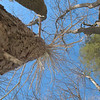 Photo Courtesy of Kevin Rolwing - Looking up at decaying hemlock and tulip tree