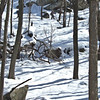 Sierra Club Northern Harriman Snowshoe 3-6-2010 - Start of Appalachian Trail Section from Elk Pen.  Late start at 11 AM.