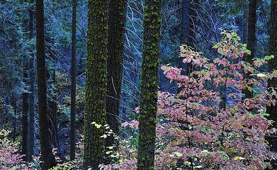 sierra fall color - 2008