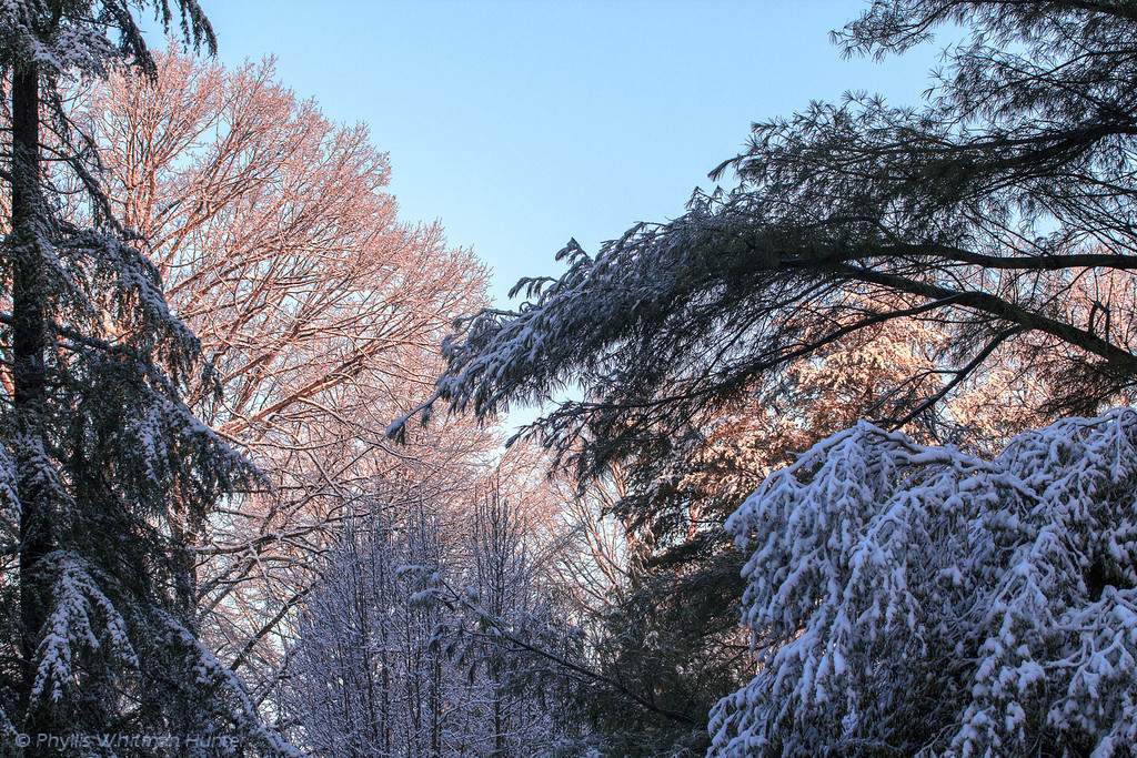 Many colors of Snow, at sunrise.
