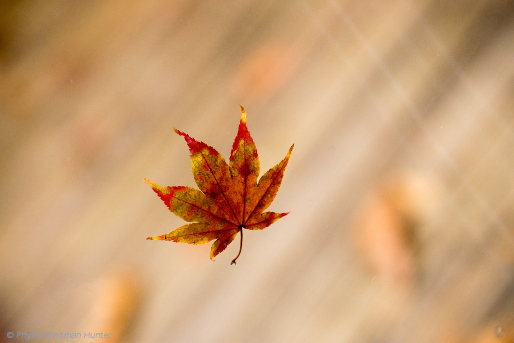 Leaf in Free Fall