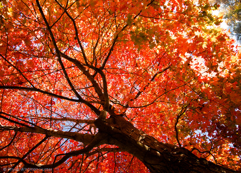 Maple in Full