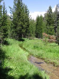 Looking down-creek; lots of well-watered vegetation.