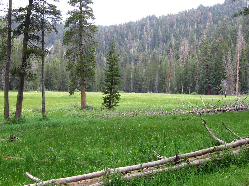 Cahoon Meadow looking north. The grasses and plants are hip-high, and the soil underneath is very wet; not good for strolling, but wonderful to look upon.