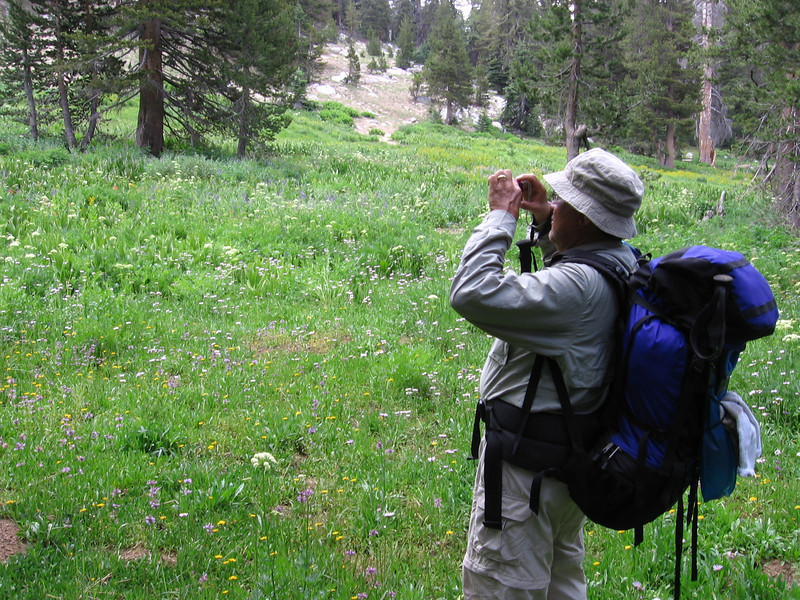 Back in Sequoia National Park descending the JO Pass trail southward. Flowers as far as the eye could see!