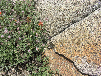 Flowers, granite, and a butterfly or moth which almost perfectly blended in with the rock (it's just below the red paintbrush at the boundary between plants and granite; view the photo in a larger version if you can't see it here.)