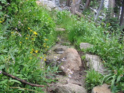 Climbing up the trail toward Silliman Pass, with small streams and accompanying flowers.