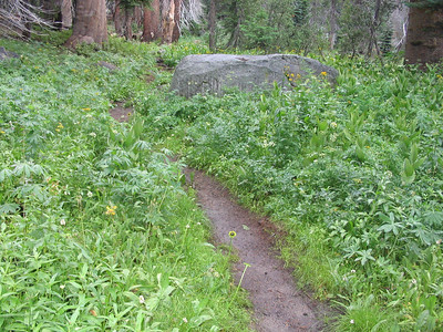 Though it wasn't raining very much, I was tempted to put on my rainpants due to the wet trailside vegetation.