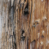 A close up look at the knots on a Utah Juniper tree.