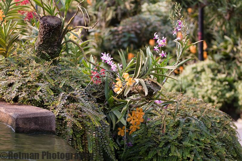 Singapore gardens-6212.jpg