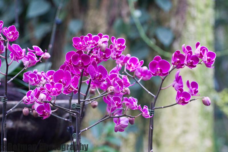 Singapore gardens-6271.jpg