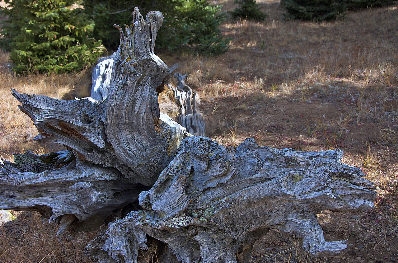 And in that it was commanded to leave the stump with the roots of the tree, <br /> your kingdom will be assured to you<br />  after you recognize that it is Heaven that rules.<br /> <br /> Daniel 4:26