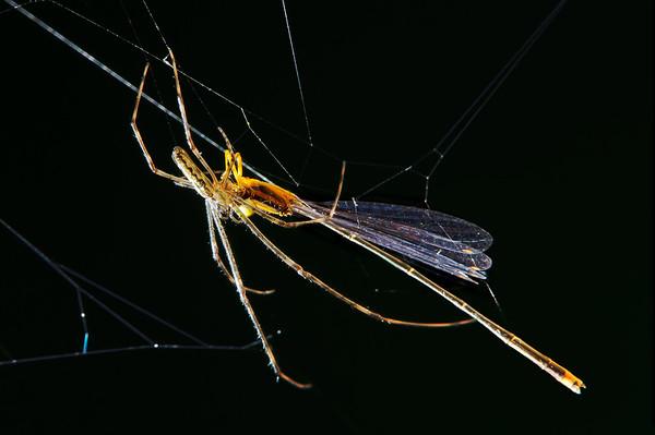 Spider composite