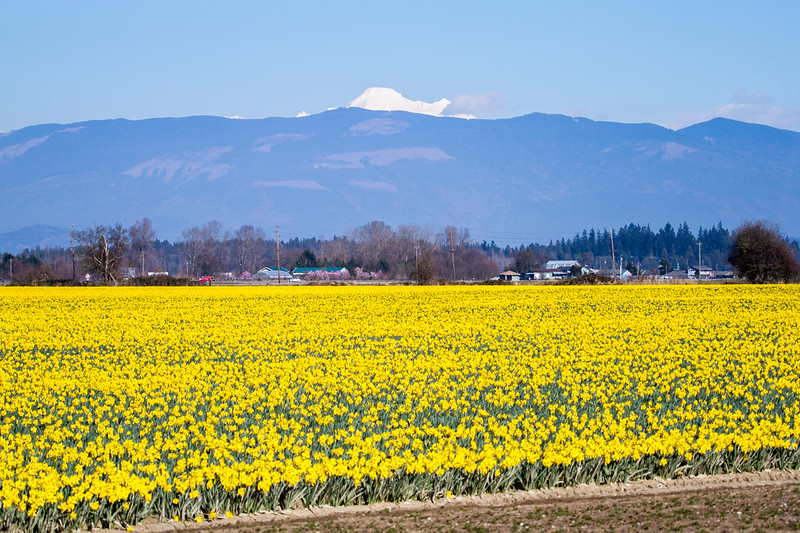 Skagit_March-32