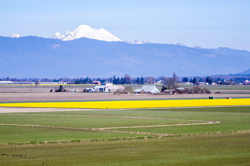 Skagit_March-258