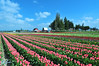 Miles of tulips, and only one angle without people in it.