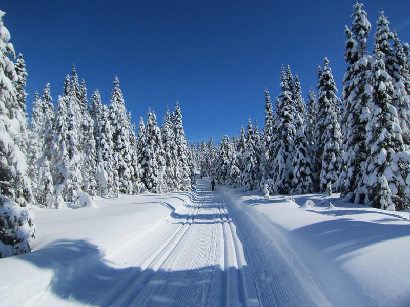 Ski de fond Camp Mercier