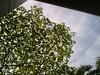 Leaves against sky 2