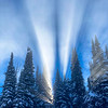 Mystical  Ice Crystals Backlit By Sun