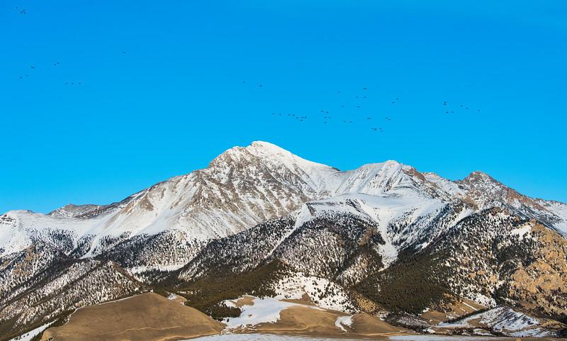 Waterfowl over Mt. Borah