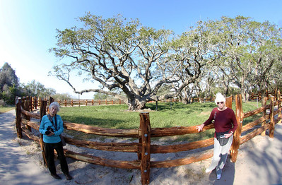 Carol, Big Tree, Jan