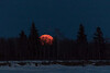 Moon rising through the trees of Butler Island in the Moose River across from Moosonee.