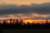 Trees at sunset in Moosonee.