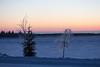 Trees along the Moose River in Moosonee before dawn.