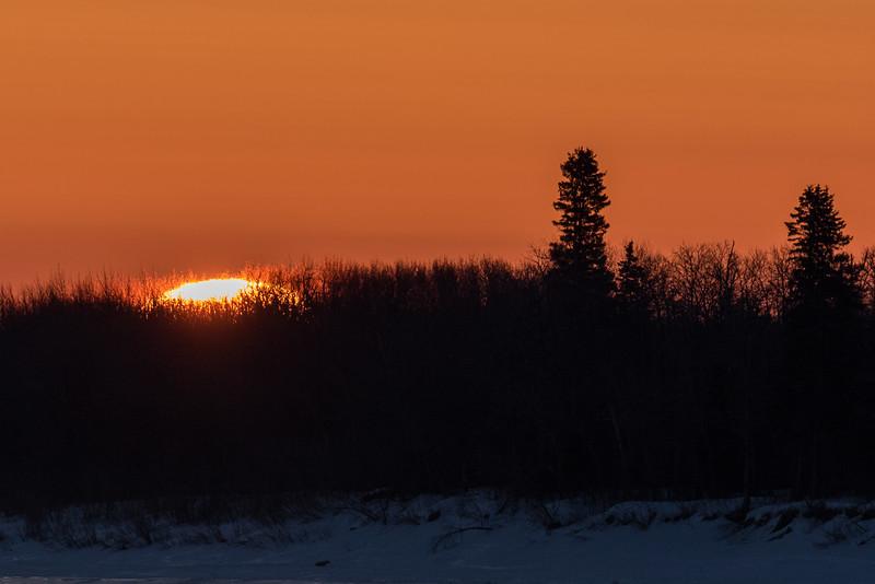 Sunrise through the bushes.