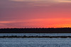 Geese flying over the sandbar in the Moose River before sunrise. Coloured skies above.