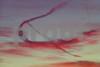P1310860 JLSS pf Close up Cupid's Bow Dec 13 2014