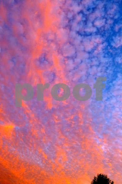 P1010383 Oct 4 2012 Mackeral sky sunset w tree 9 5x14 tc