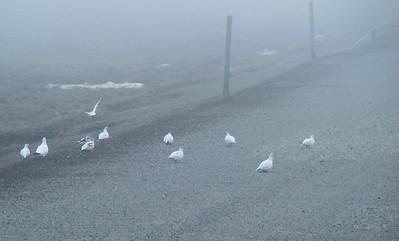 So foggy even the birds were walking!