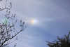 This is the first image of the sundog I found today.