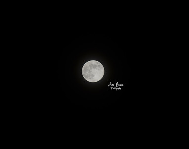 Blue Moon 8/20/2013  | Florida Nature, Landscape Photographer, Home Decor Prints  | Fine Art Photography Prints Wall Art