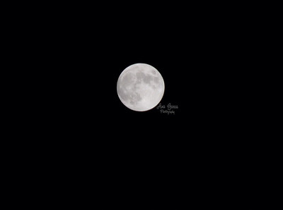 Full Moon before the Total Lunar Eclipse  | Florida Nature, Landscape Photographer, Home Decor Prints  | Fine Art Photography Prints Wall Art
