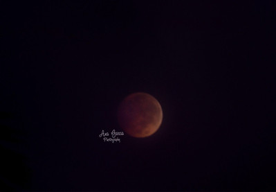 Blood Moon. 10/8/2014 #AnaGarciaPhoto #AnaGarciaPhotography