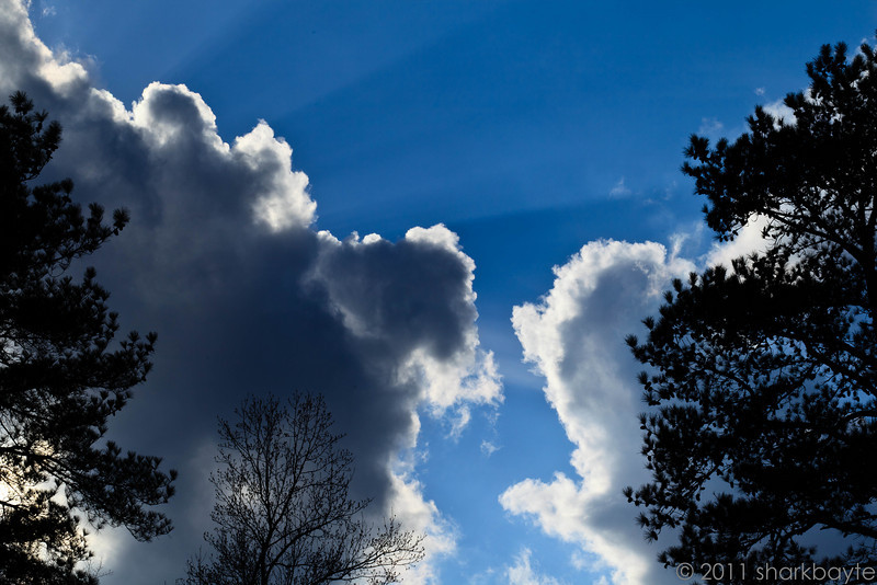 February 19, 2011-Partly cloudy with sunbeams, I'll take it! Hope the weather continues to warm and stay sunny or partly sunny! Happy Saturday! Day 50 #365Project @sharkbayte
